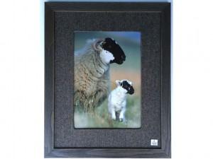 Black faced sheep & Lamb 695x550 £295